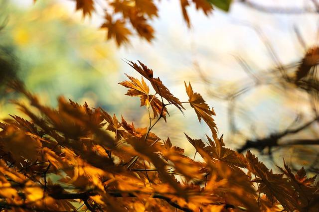 zabiegi jakie warto wykonać jesienią