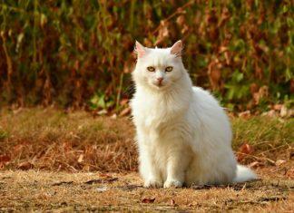 Jednym ze sposobów jest zbudowanie fosy wokół domostwa, co ma spowodować odstraszenie kotów ze względu na ich wrodzoną niechęć do wody.