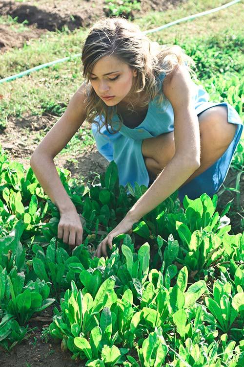 Prace ogrodowe – niezbędnik ogrodnika