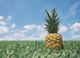 Jak zasadzić ananasa