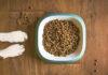 Dobierz karmę dla psa do jego wszystkich potrzeb